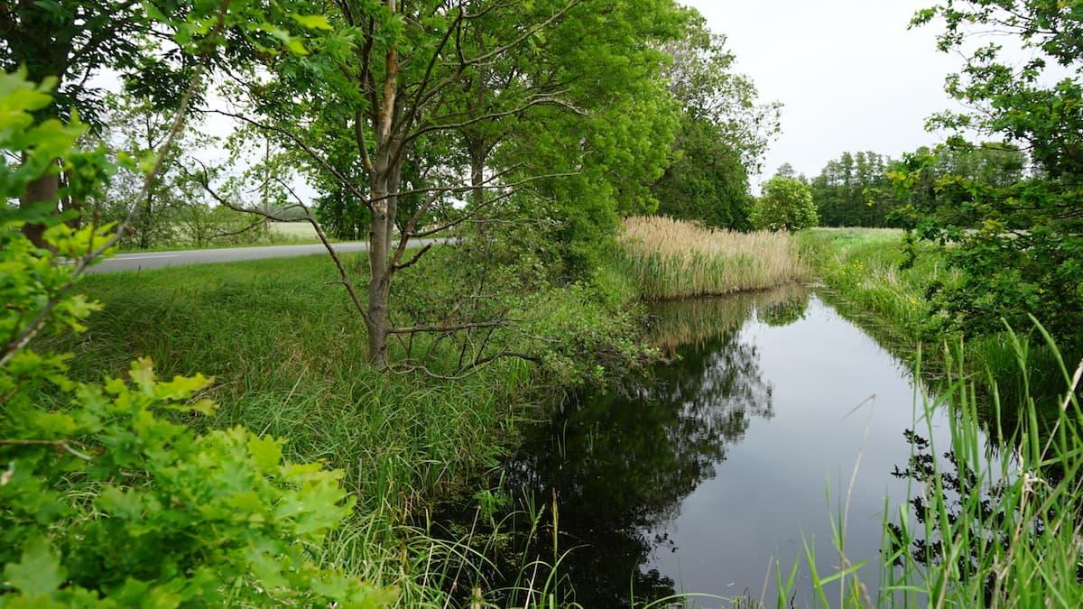 Altmark, Drömling. Foto: Beate Ziehres