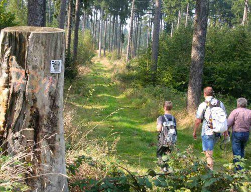 Wandern in Bad Harzburg: 2 Touren, 6 Tipps und ein Extratipp