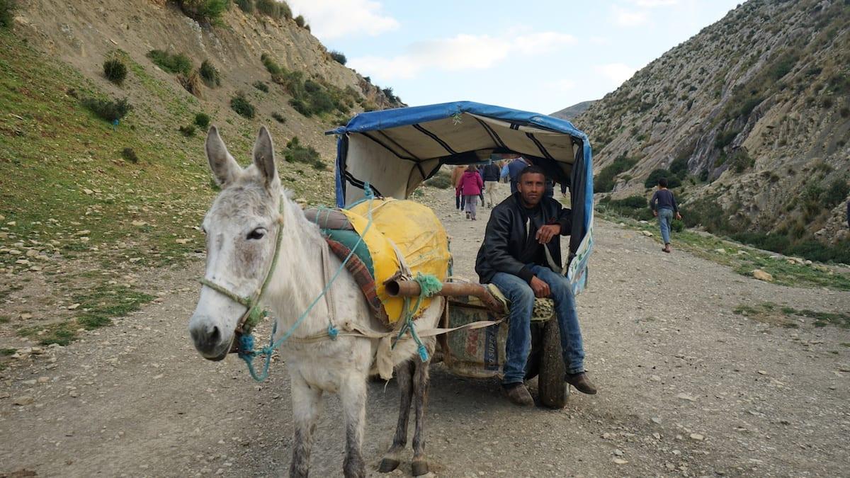 Statt wandern: Eselsfuhrwerk im Norden Tunesiens. Foto: Beate Ziehres