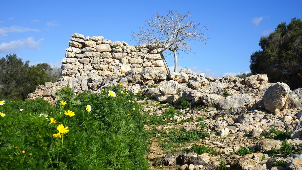 Mallorca im Winter: Beim Wandern entdeckt: Ausgrabungen Capocorb Vell Talaiots. Foto: Beate Ziehres