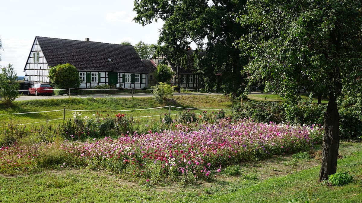 Oderbruch, Neulietzegöricke, Schachtgraben mit Blumengarten. Foto: Beate Ziehres