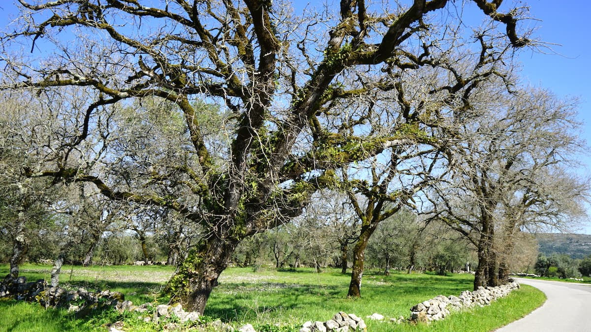 Portugal, Landschaft im Parque Natural Arrimal