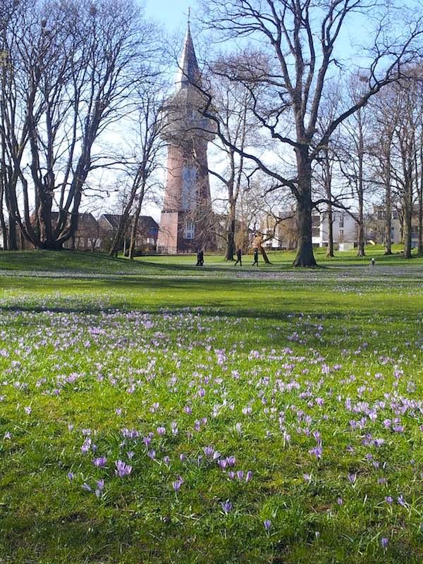 Krokusse im Schlosspark vor Husum – Foto: Beate Ziehres