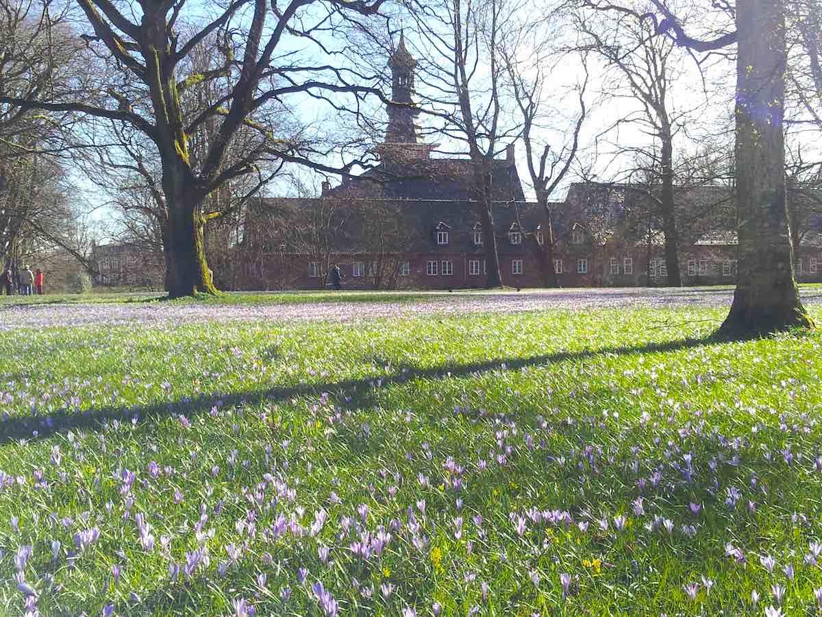 Blütenteppich hinter Schloss vor Husum – Foto: Beate Ziehres