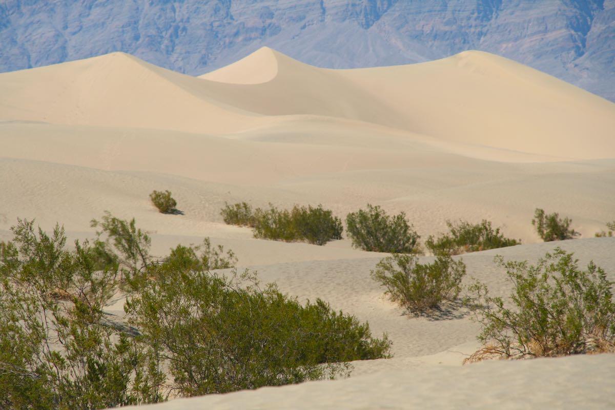 Dünenlandschaft wie aus dem Bilderbuch: die Mesquite Flat Sand Dunes im Death Valley – Foto: Beate Ziehres
