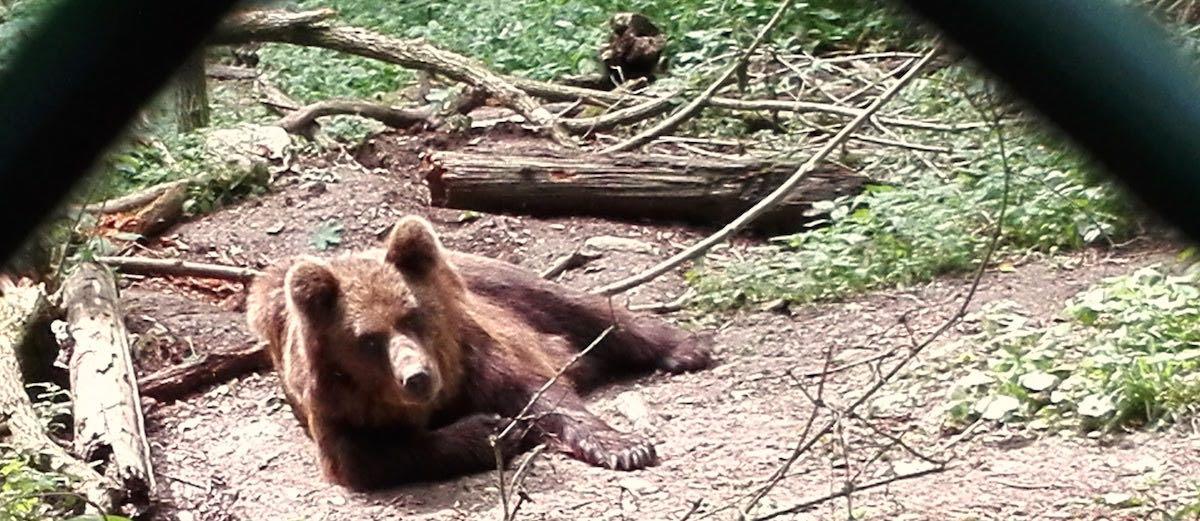 Eichsfeld: Bärin Laura im Bärenpark Worbis – Foto: Beate Ziehres