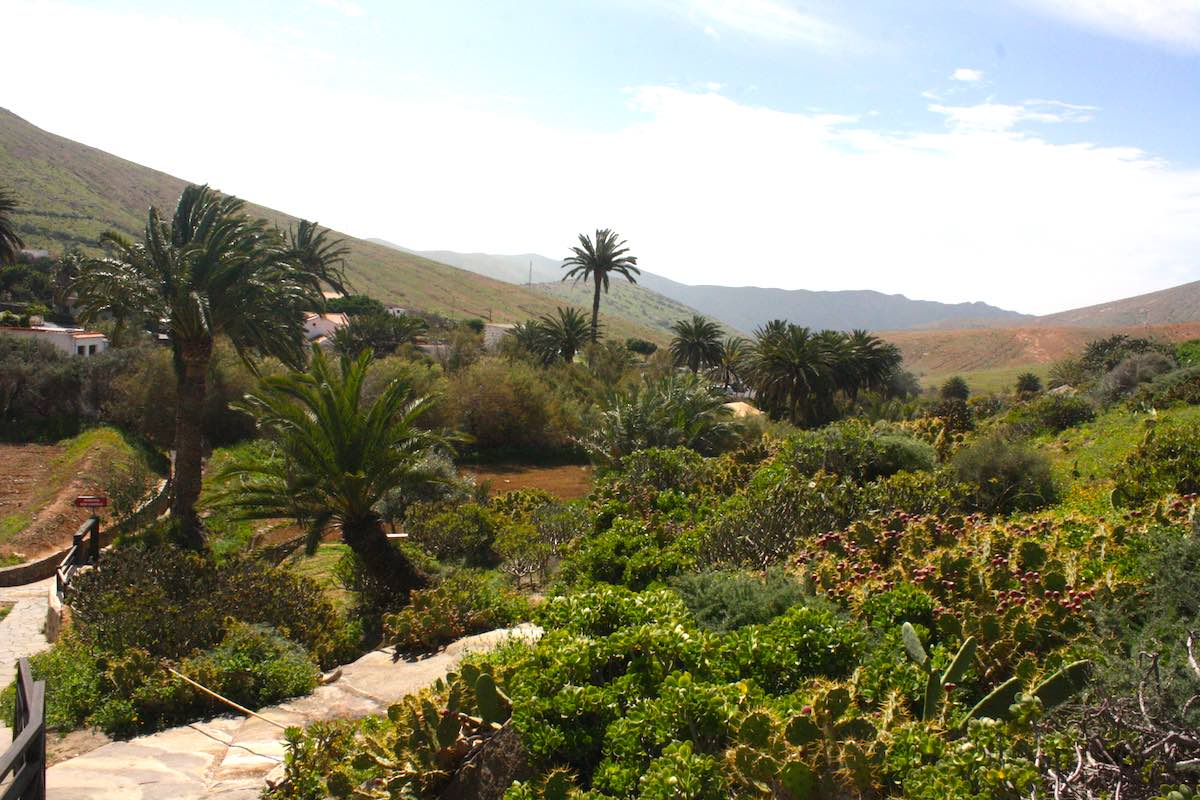 Fuerteventura einmal anders: grüne Landschaft um Betancuria – Foto: Lena Ziehres