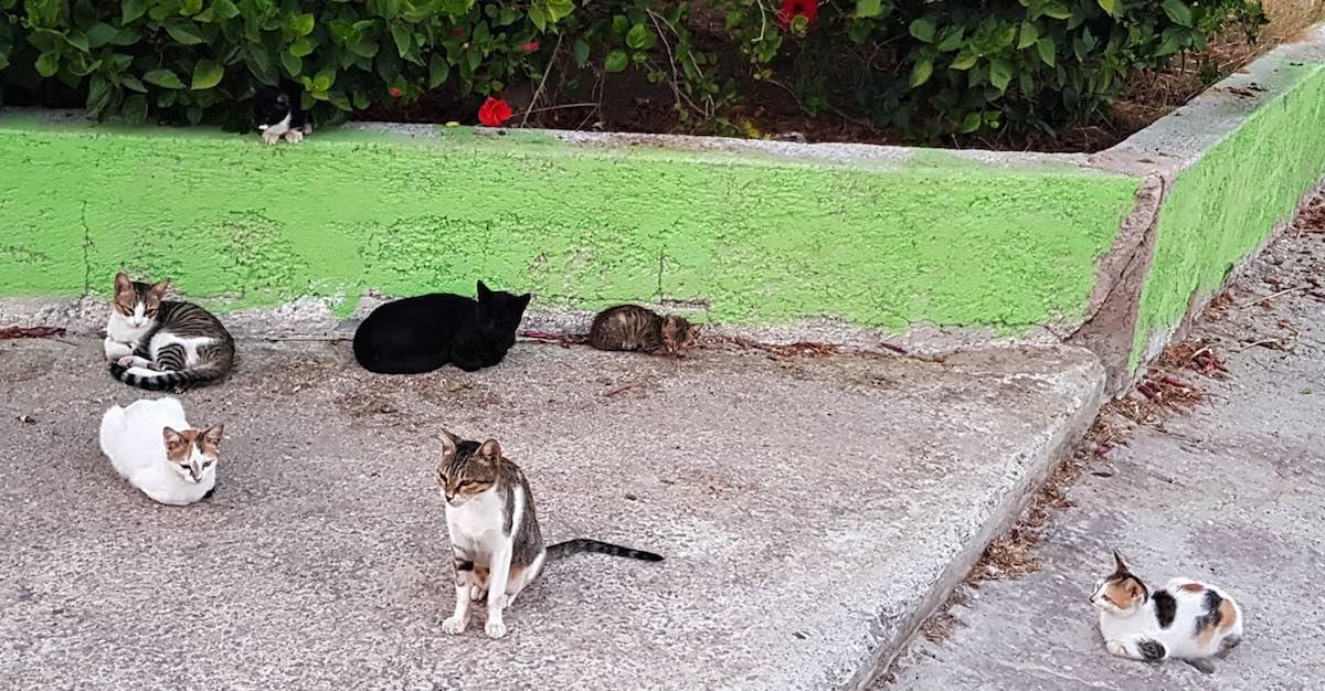 Kos: Unwiderstehlich für Katzenfreunde – Foto: Lena Ziehres
