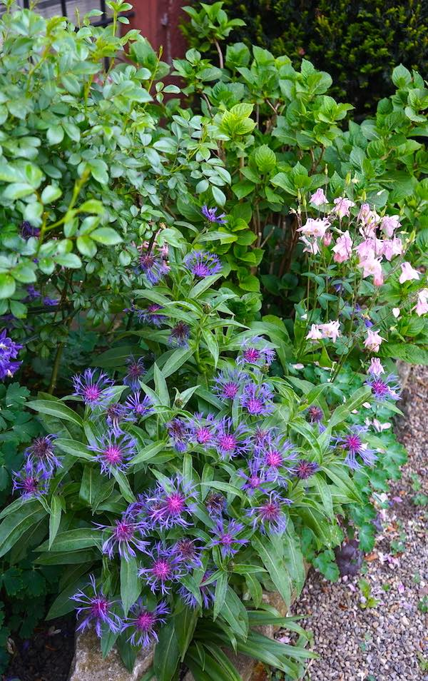 """Reiselust-Mag: Blumen im Garten des """"Ochsen"""" in Feldberg, Müllheim, Markgräflerland – Foto: Beate Ziehres"""