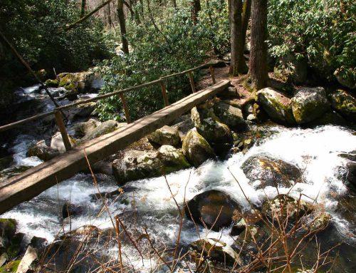 Tennessee und North Carolina: 13 Bilder aus den Smoky Mountains