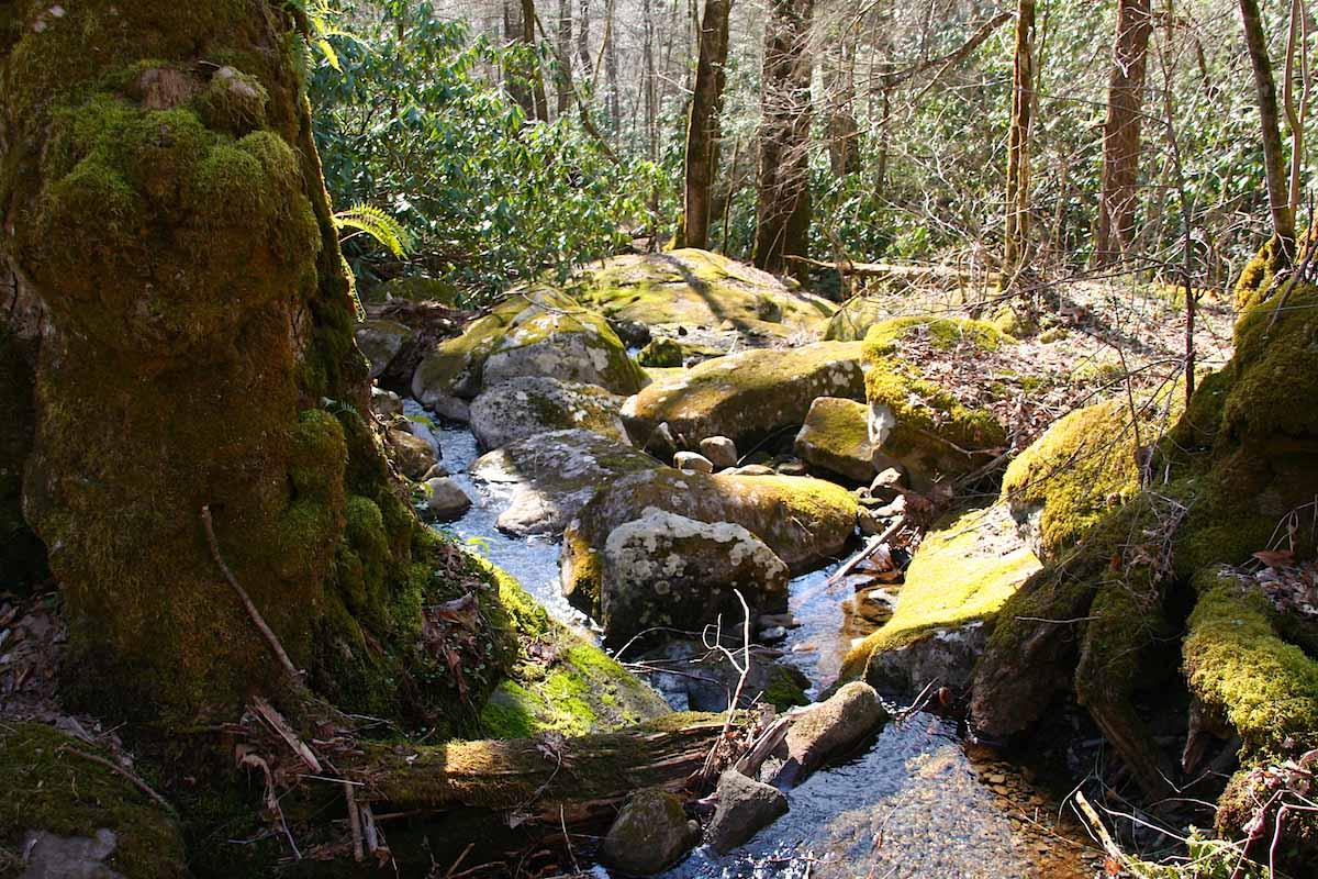 Tennessee: Alte Bäume, Moos und kleine Pools prägen das Bild in den Smoky Mountains – Foto: Beate Ziehres