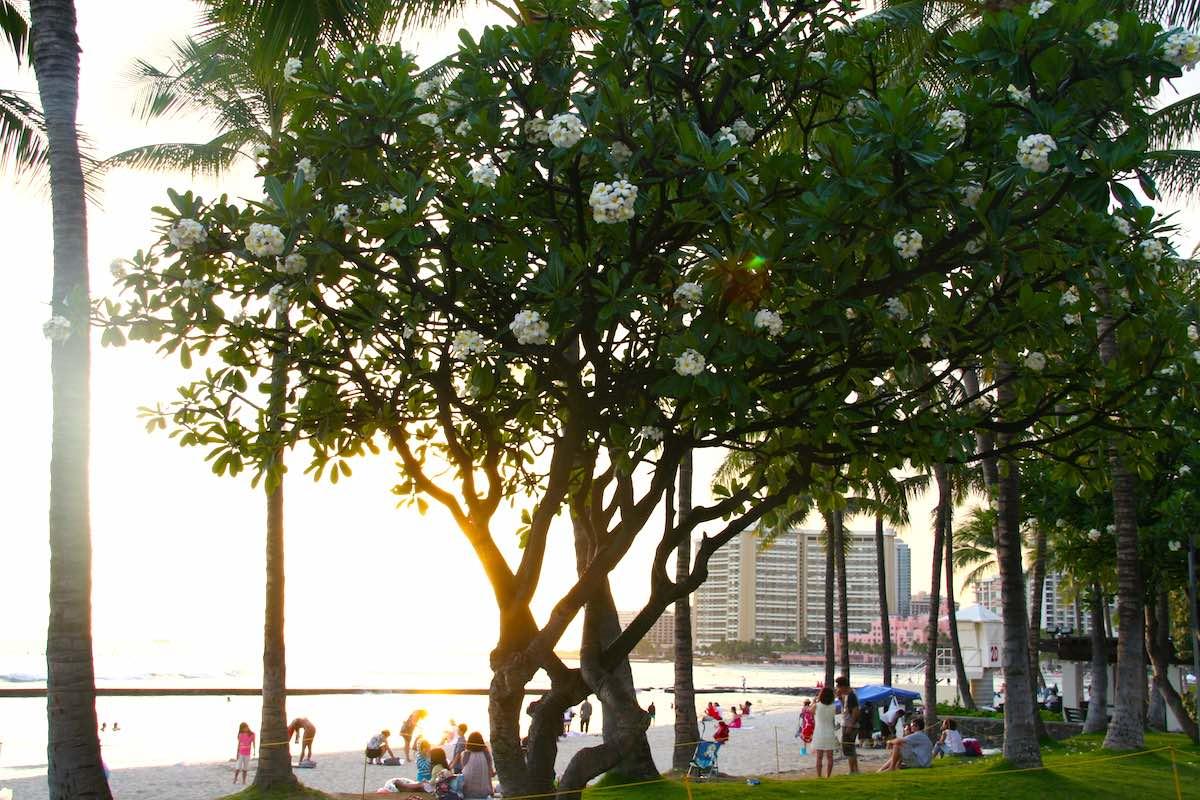 Quirliges Leben am Strand von Waikiki, bevor die Sonne versinkt – Foto: Beate Ziehres