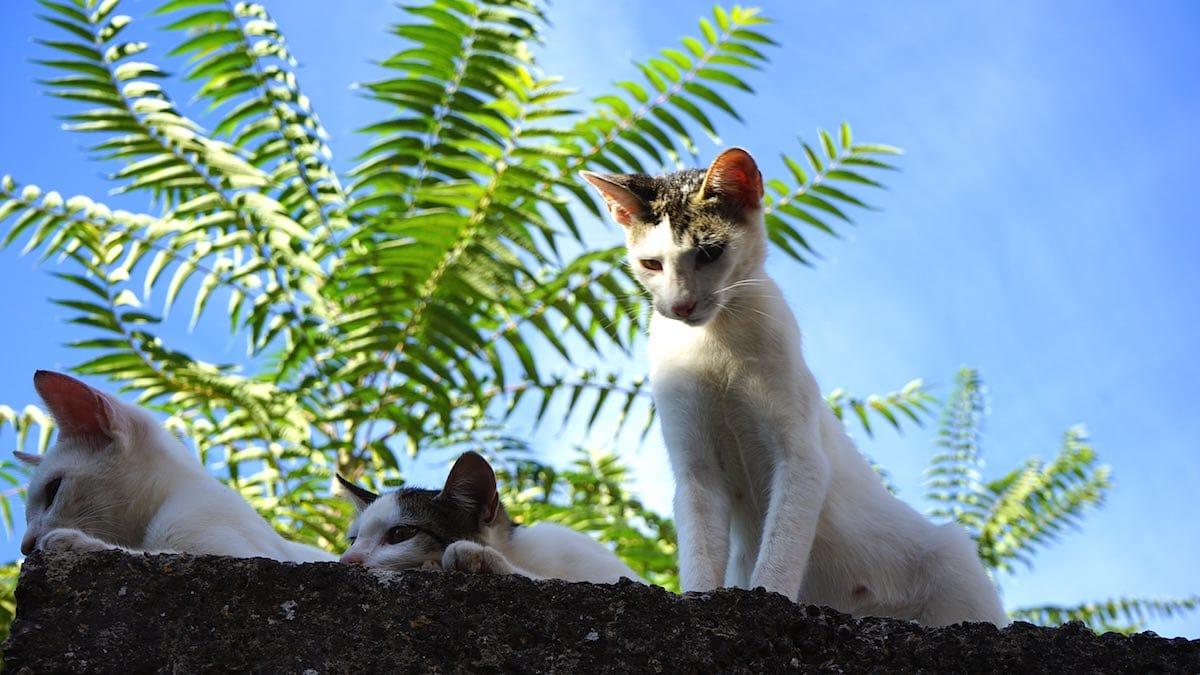 fopanet Tiere Katzen stari grad hvar kroatien Reiselust-mag beate ziehres