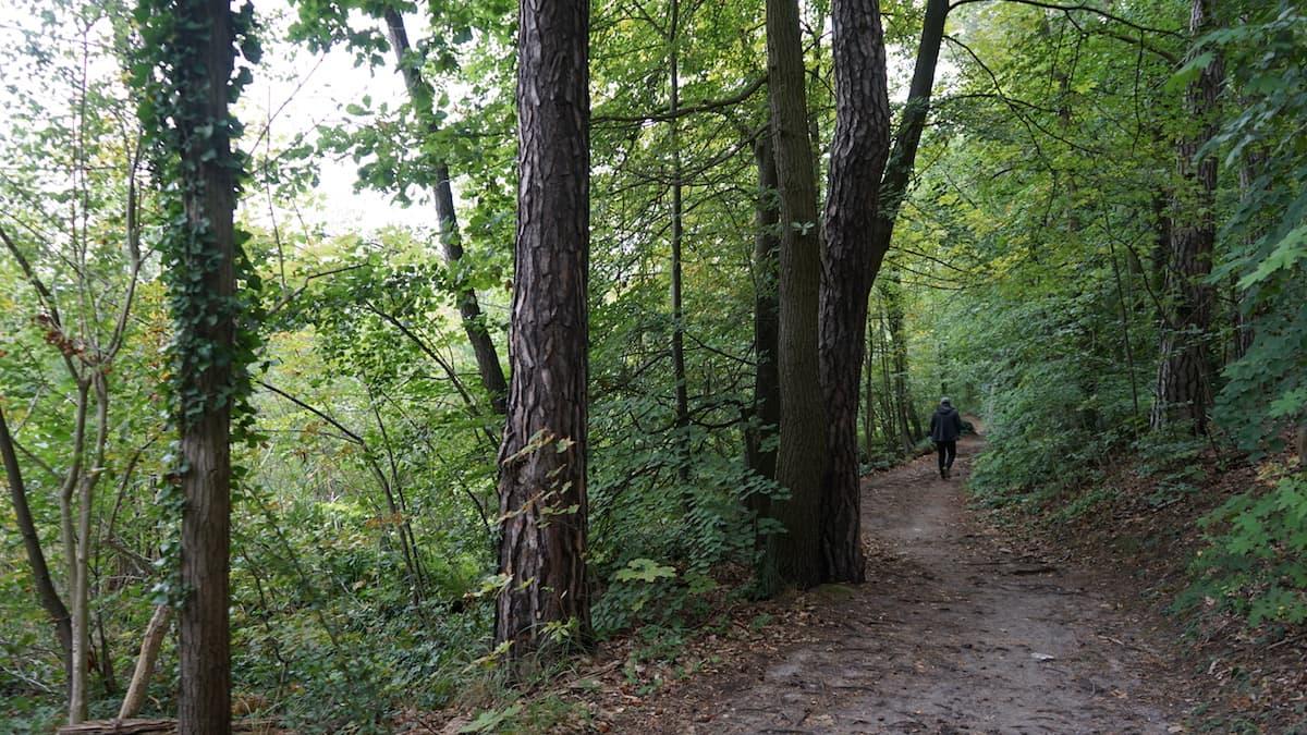 Seenland Oder-Spree, auf dem 66-Seen-Wanderweg durch den Wald. Foto: Beate Ziehres, Reiselust-Mag