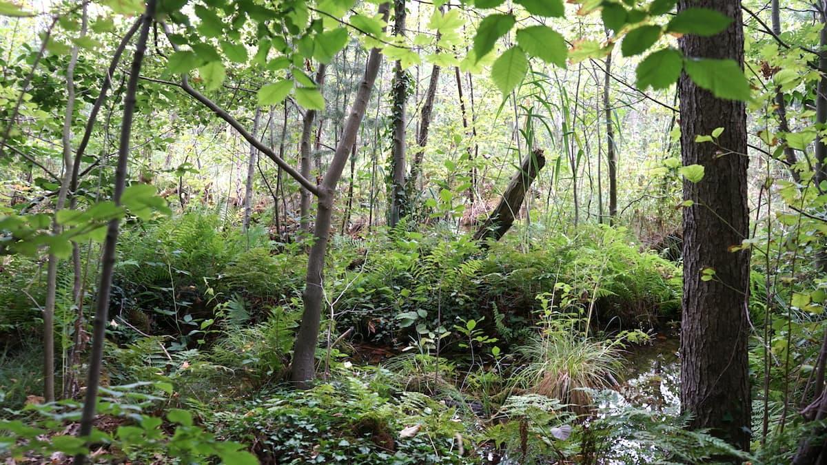 Seenland Oder-Spree, Sumpf am Ufer des Kalksees. Foto: Beate Ziehres, Reiselust-Mag