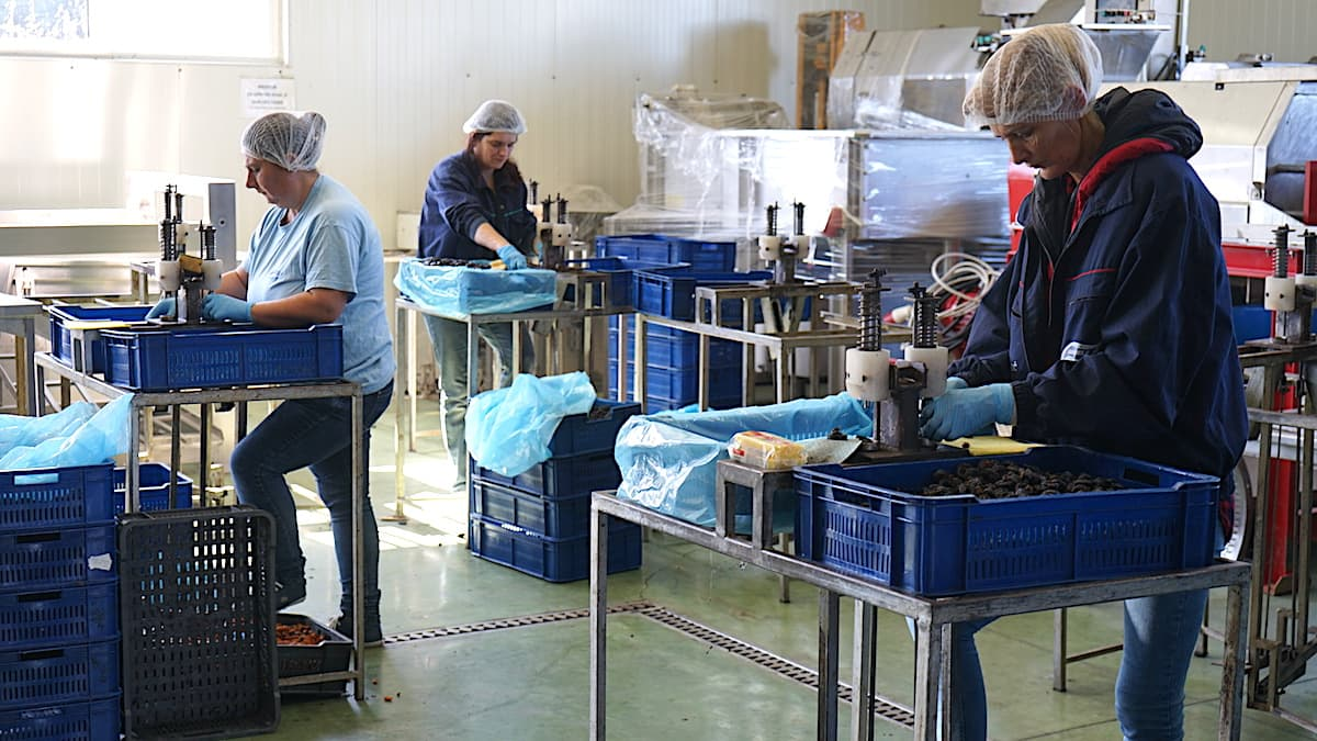 Agranela Produktion von Trockenpflaumen in Serbien. Foto: Beate Ziehres