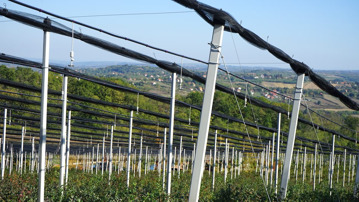 Agrobel Plantagen in Serbien. Foto: Beate Ziehres