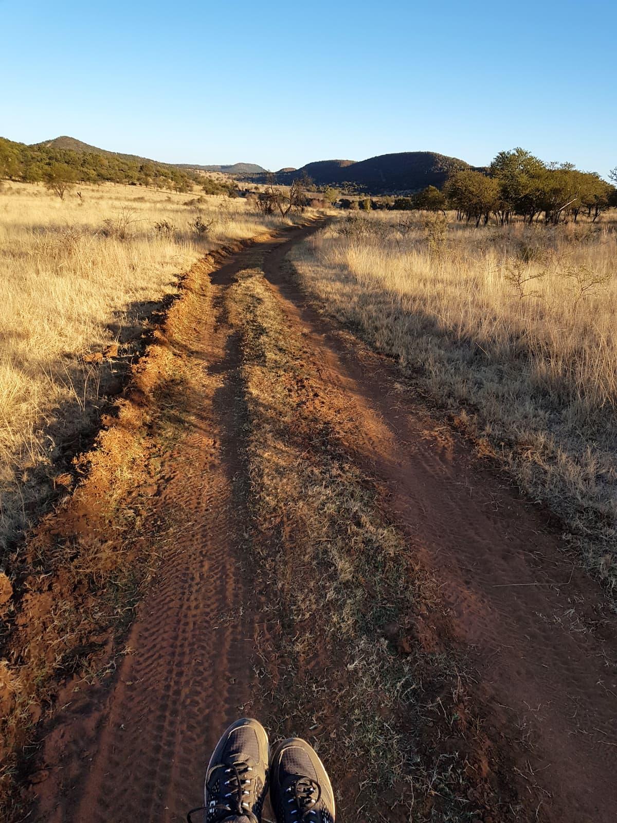 Safari in Südafrika, ChaZen privates Wildreservat: Blick von der Motorhaube. Foto: Lena Ziehres