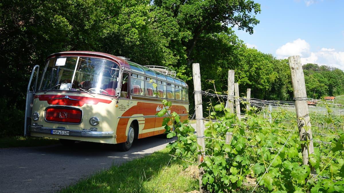 Taubertal: Mit dem Oldtimer-Bus in den Weinbergen – Beate Ziehres