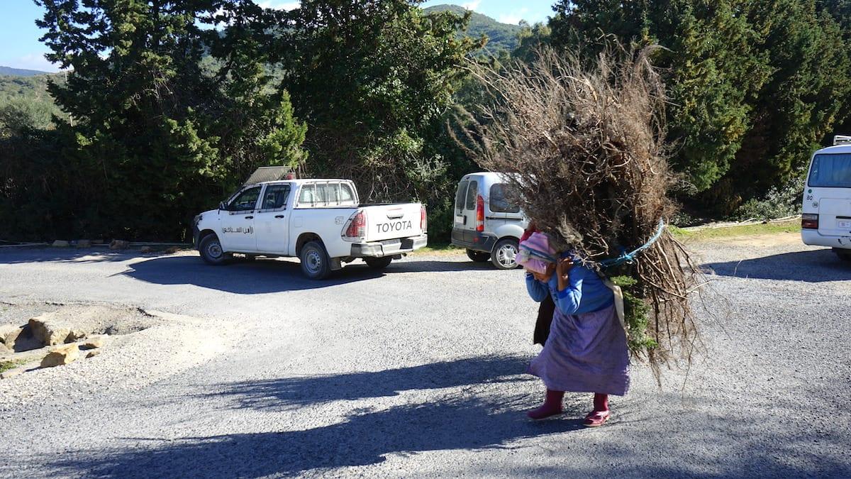Tunesien Norden Tabarka: Alte Frauen haben Heidekraut gesammelt. Foto: Beate Ziehres