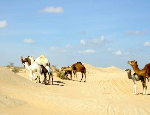 Tunesien-Urlaub: 5 Tipps und ein Sicherheitshinweis für den Süden
