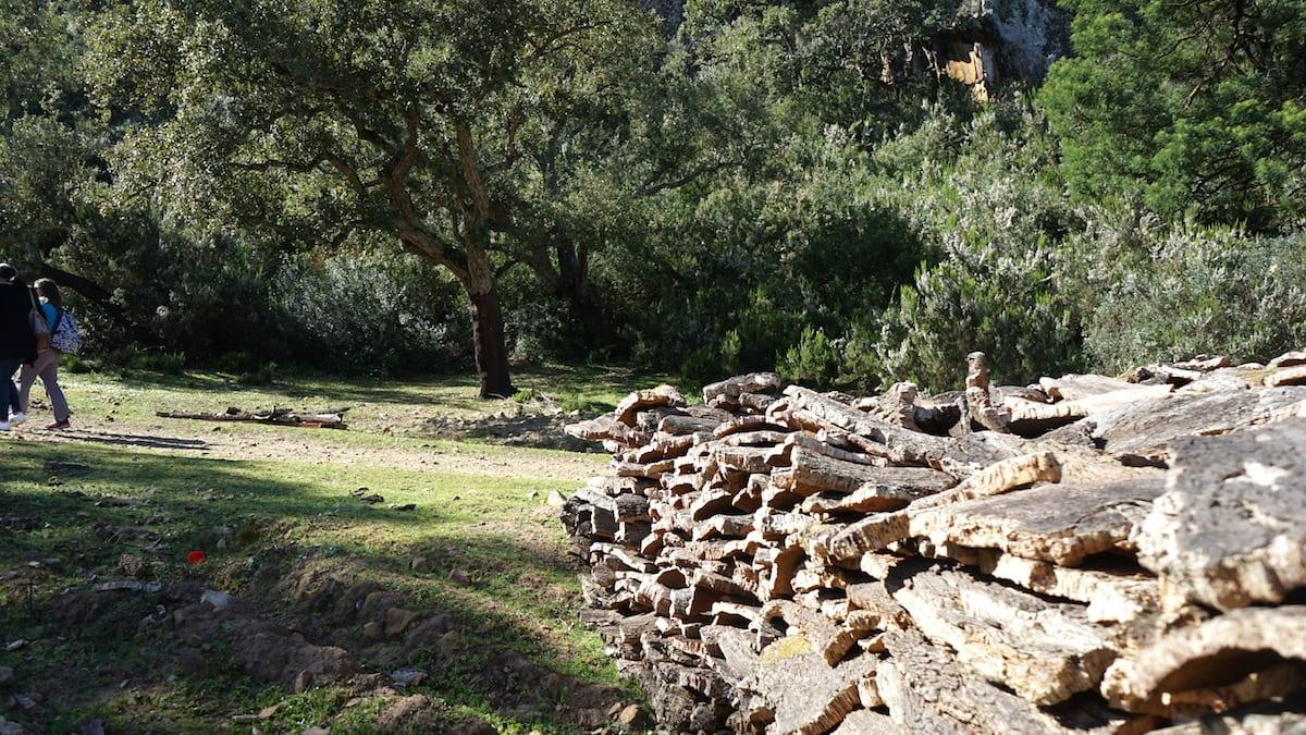 Korkeichenrinden bei Tabarka im Norden Tunesiens. Foto: Beate Ziehres