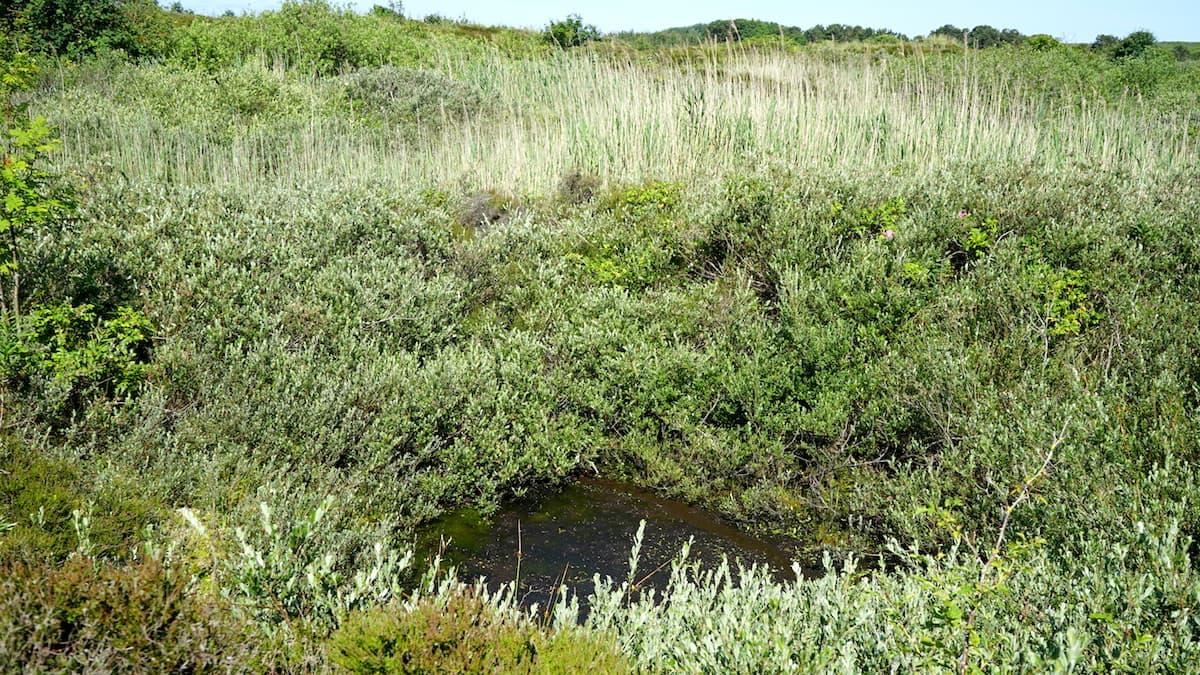 Wangerooge: Bombentrichter in der Heide – Foto: Beate Ziehres