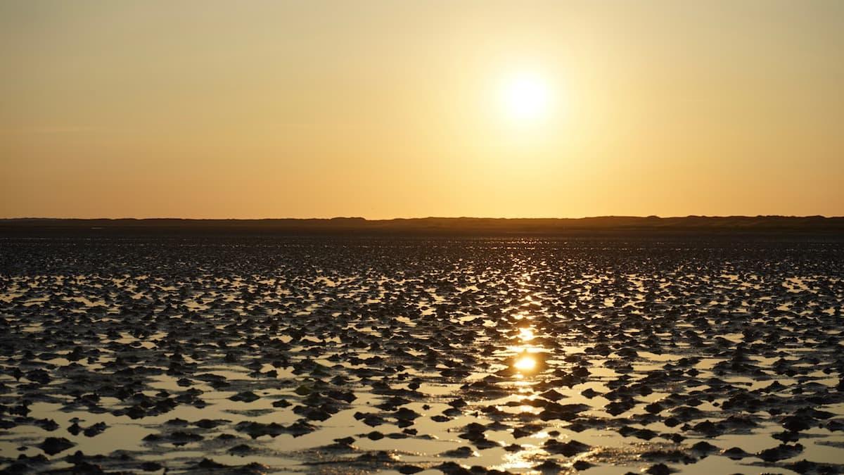 Wangerooge: Sonnenuntergangsstimmung im Watt – Foto: Beate Ziehres