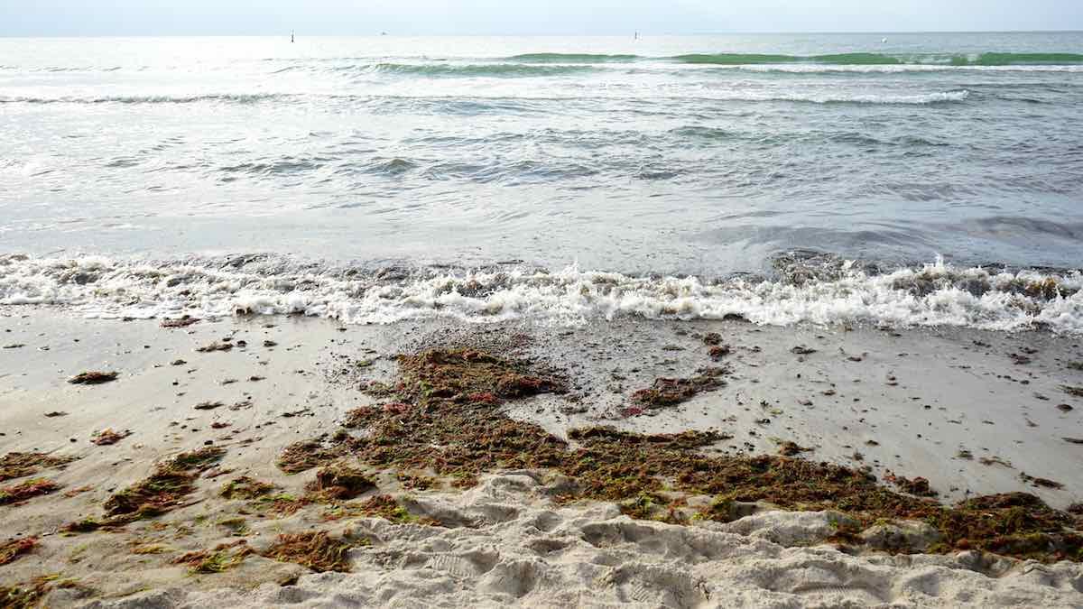 Nur für kurze Zeit: perfekte Wellen zum Reiten am Strand von Warnemünde – Foto: Beate Ziehres