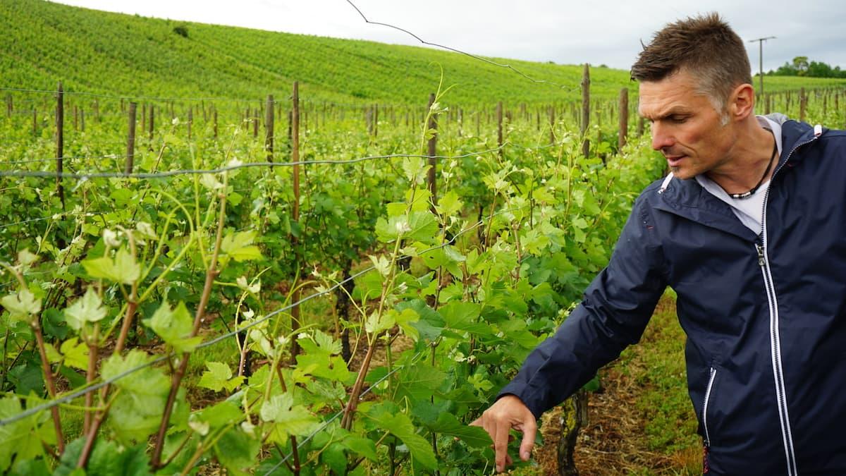 Weinstraße Taubertal: Michael Spies erklärt: In Beckstein steht der Wein während unseres Besuchs in Blüte. Foto: Beate Ziehres
