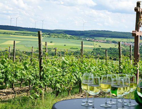 Wein im Taubertal: Tauberschwarz und andere Köstlichkeiten